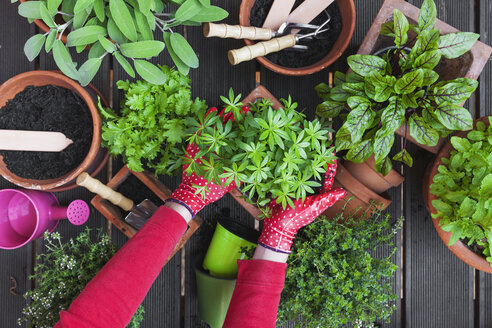 Gardening, potting medicinal and kitchen plants - GWF004717