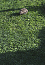 Hedgehog on a meadow - DEGF000809