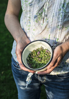Woman holding bowl of freshly picked thyme - DEGF000812
