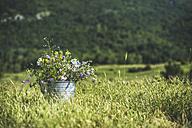 Bucket of wildflowers standing on a meadow - DEGF000815