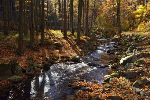 Germany, Saxony-Anhalt, Harz National Park, Ilse River at Ilse Valley in autumn - RUEF001723