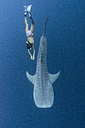 Indonesia, Cenderawasih Bay, Whaleshark and female skin-diver - TOVF000052