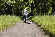 Back view of senior man strolling with wheeled walker and his dog in nature - UUF007582