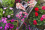 Gardening, different spring and summer flowers, gardening tools on garden table - GWF004721