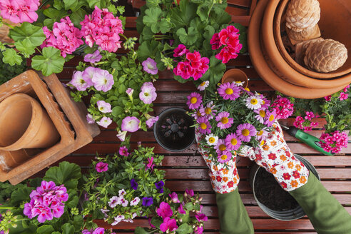 Gardening, different spring and summer flowers, flower box and gardening tools, potting - GWF004724