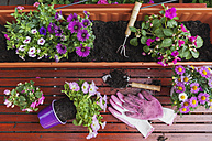 Gardening, different spring and summer flowers, flower box and gardening tools on garden table - GWF004727