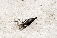 Feather of crow on sand - NGF000331