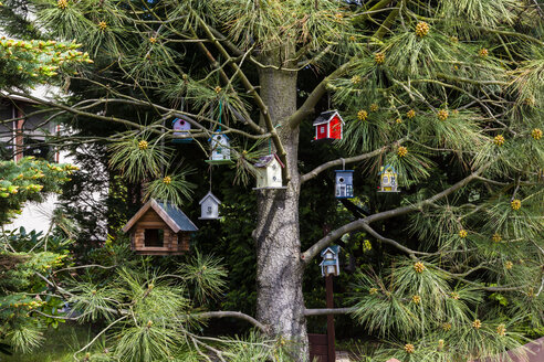 Birdhouses hanging in a tree - NGF000337