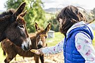 Little girl feeding donkeys - MGOF001935