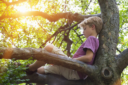 Boy reading book in tree - HSIF000444
