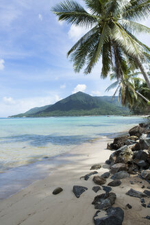 Thailand, Koh Phangan, palm trees on beach - SBOF000027