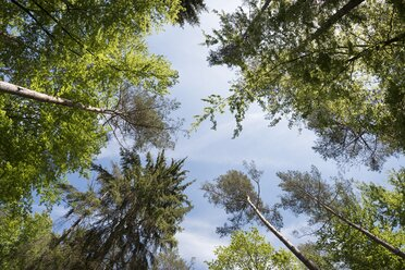 Worm's eyeview of trees in a mixed forest - ELF001752