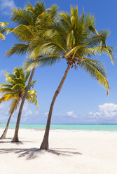 Dominican Rebublic, Tropical beach with palm trees - HSIF000479