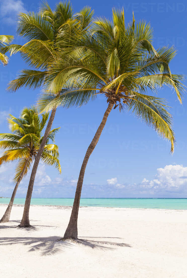 Dominican Rebublic, Tropical beach with palm trees - HSIF000479 - hsimages/Westend61
