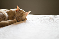 Cat sleeping on bed at home - RAEF001211