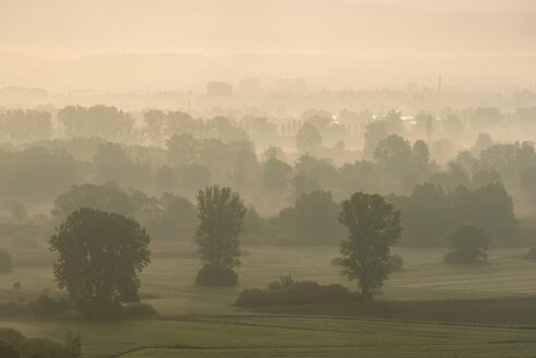 Germany, Constance district, Lake Constance, View to Radolfzeller Aachried in the morning, reedy marsh - ELF001774