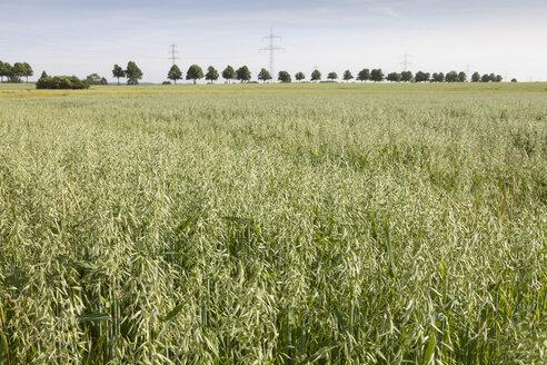 Germany, field with oat, Avena - WIF003333