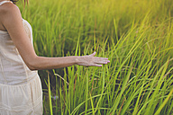 Hand of woman touching grasses - KNTF000347