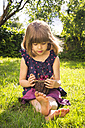 Little girl with punnet of cherries sitting on a meadow in the garden - LVF004961