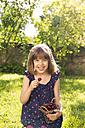 Portrait of laughing little girl eating cherries in the garden - LVF004964