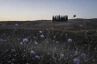 Italy, Tuscany, Val d'Orcia, group of cypresses - PAF001725