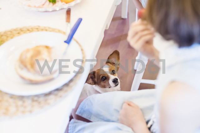 Dog looking at girl sitting at dining table - MJF001835 - Jana Mänz/Westend61