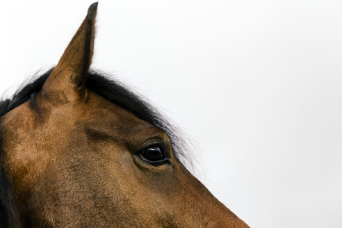 Head and eye of a brown horse - MIDF000732