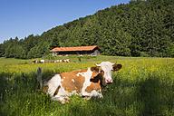 Germany, Bavaria, Upper Bavaria, - SIEF007050