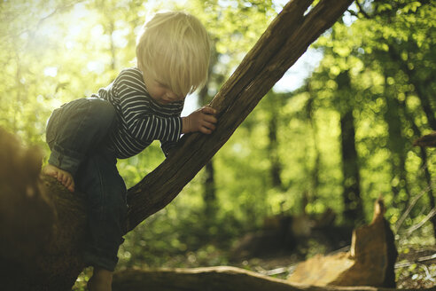 Little boy playing in forest - SBOF000139