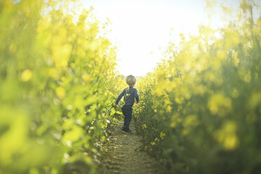 Boy in canola field - SBOF000166