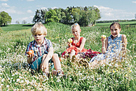 Children sitting in meadow eating apples - MJF001942