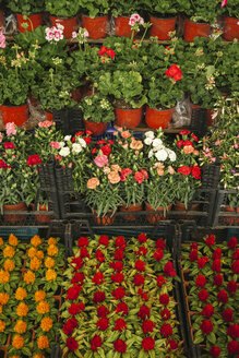 Turkey, Istanbul, Flowers at the marketplace - BZF000308