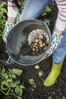Harvesting potatoes - DEGF000852