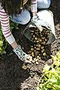 Harvesting potatoes - DEGF000855