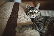 Tabby cat relaxing on the bed - RAEF001238