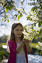 Little girl watching blossoms of a tree - SARF002797