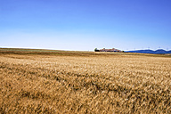 Spain, Andalusia, Field of barley, farmhouse and wind turbines in the background - SMAF000477
