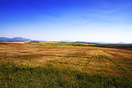 Spain, Andalusia, Field of cereal crops, olive groves - SMAF000480