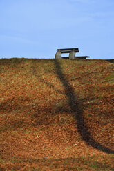 Park bench with autumn leaves and the shadow of a tree - AXF000783