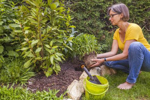 Woman planting marguerite in garden - WDF003679