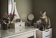 Staring cat sitting on cabinet beside a vanity - RAEF001258
