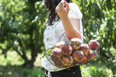 Woman carrying basket with peaches in orchard - DEGF000858