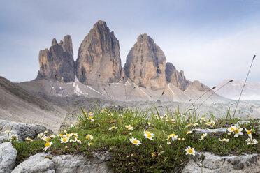 Italy, Dolomites, Tre Cime di Lavaredo, white flowers - MKFF000299