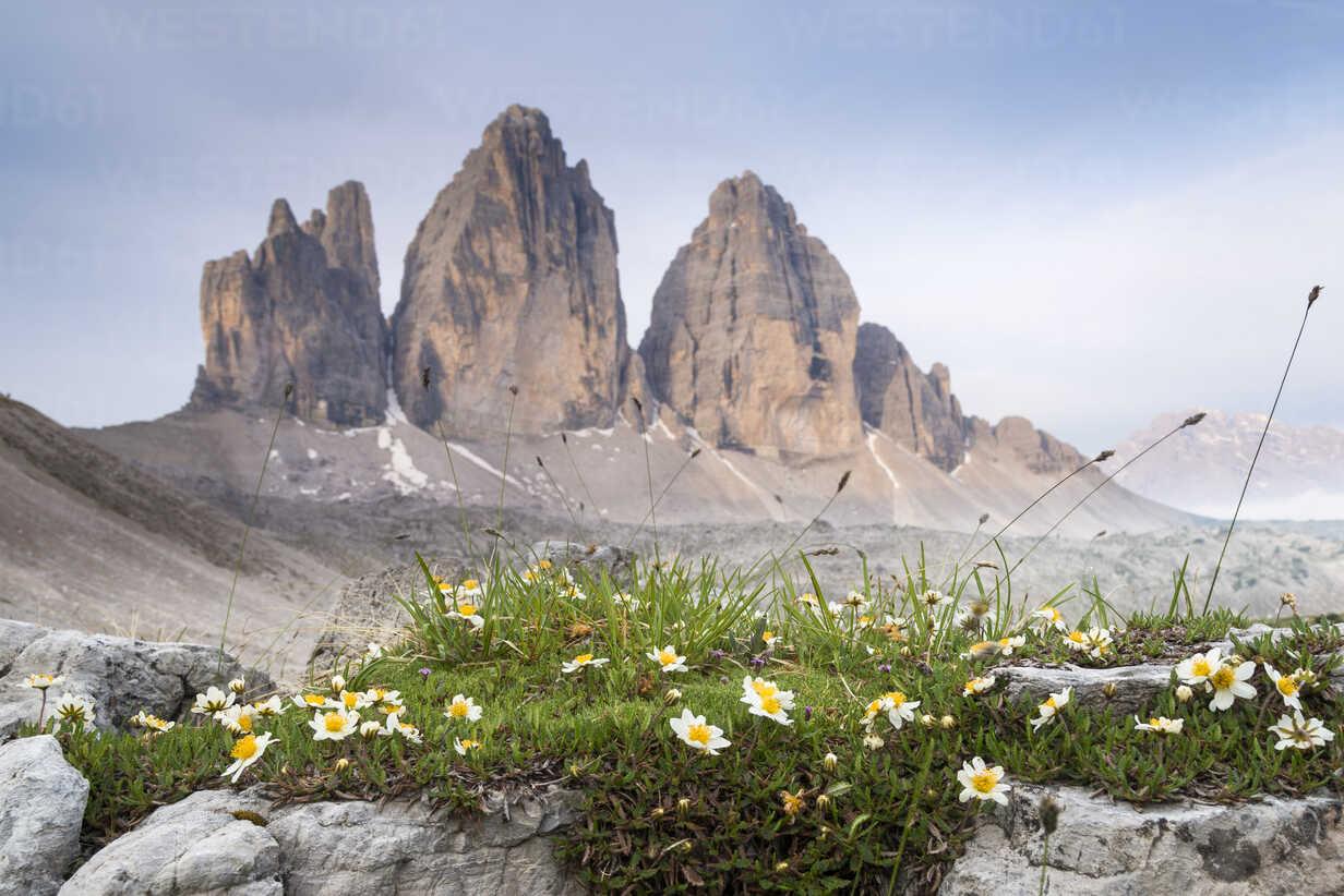 Italy, Dolomites, Tre Cime di Lavaredo, white flowers - MKFF000299 - Markus Kapferer/Westend61