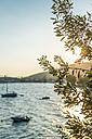 Greece, Kala Nera, olive tree at the sea at sunset - DEGF000908