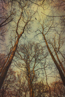 Bare trees in the evening light - DWIF000749