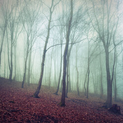 Deciduous forest in autumn, morning mood - DWIF000755