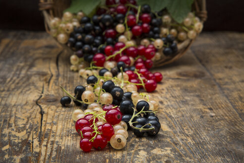 Black, red and white currants on dark wood - LVF005109