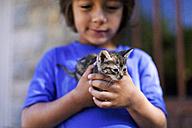 Hands of little boy holding tabby kitten - VABF000660