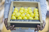 Man holding crate of lemons - ZEF009108